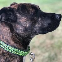 Large-Dog Collar - Insanely Paracord