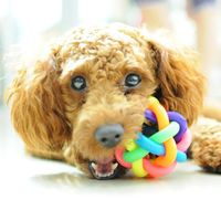 Colorful Rainbow Pet Bell Ball Dog Toy - PurdyPaws