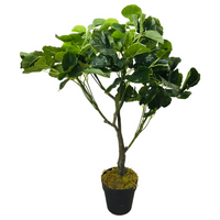 Super realistic artificial green money bag tree with a moss covered base in a black plastic pot